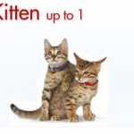 Hypoallergenic Cat Food Food For Cats